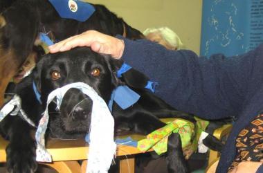 Terapias asistidas con perros para personas mayores
