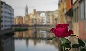 Girona i la rosa