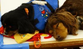 Terapia amb Cans al Centre Maria Gay de Girona